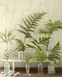 Ferns in vases