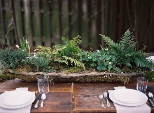Ferns in wood planter