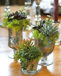 Gold containers with succulents