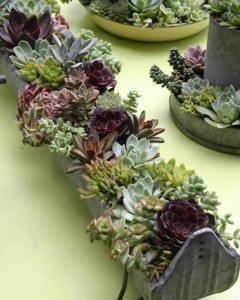 Repurposed succulent planters