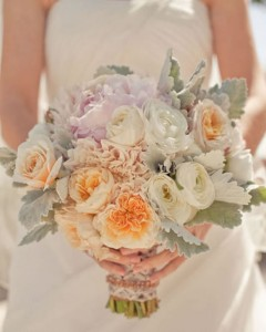 Roses and dusty miller