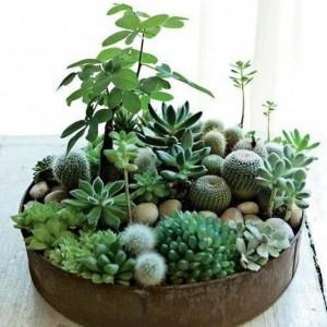 Succulents mixed planter
