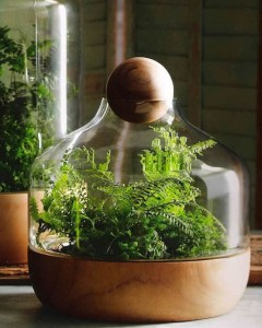 Wood and glass terrarium